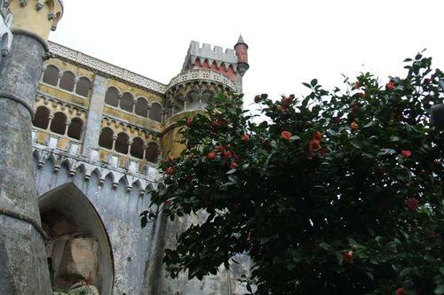 Red flowering bush at Pena Palace